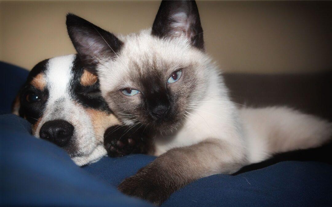Convivencia del perro y el gato en un mismo hogar