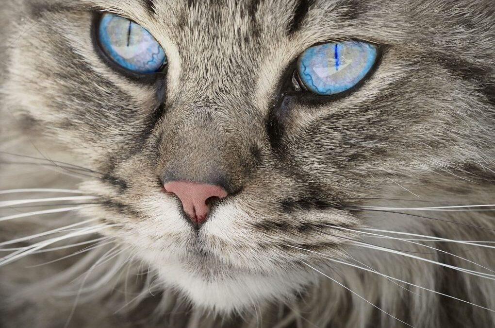 ¿Es posible adiestrar a un gato?