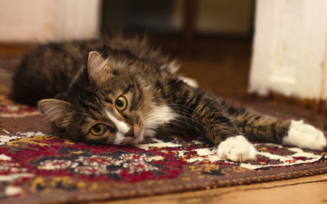 Mi gato es un destructor