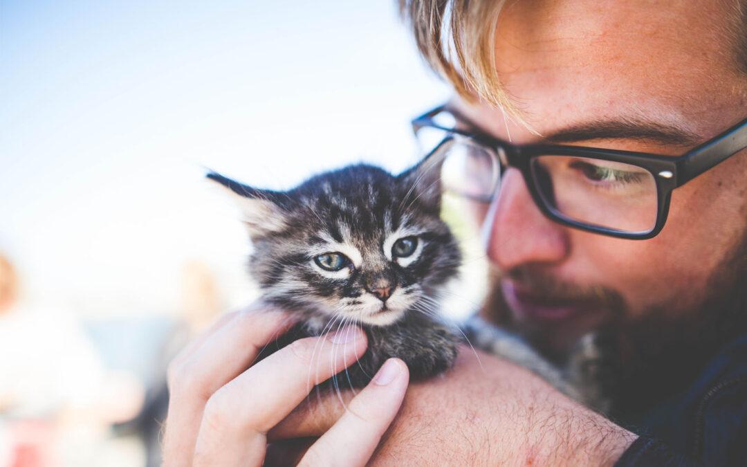 Vacunas del gato