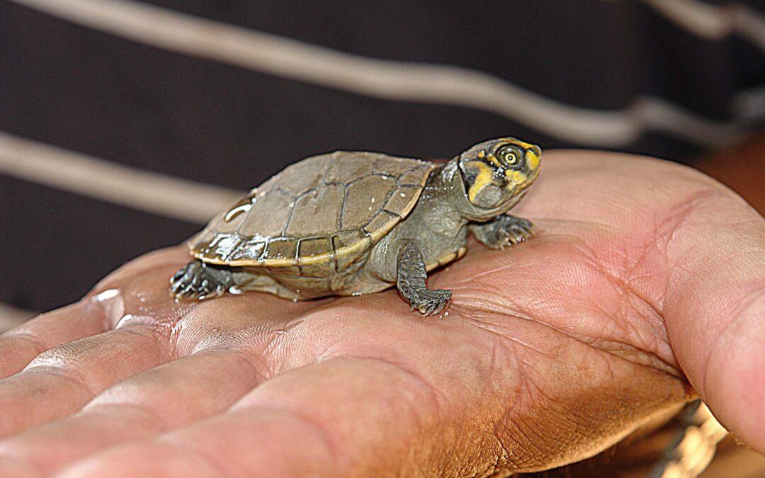 Cuidar una tortuga