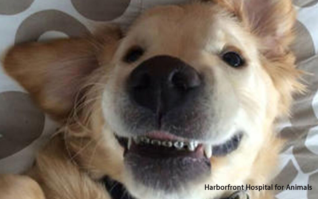 Brackets para perros