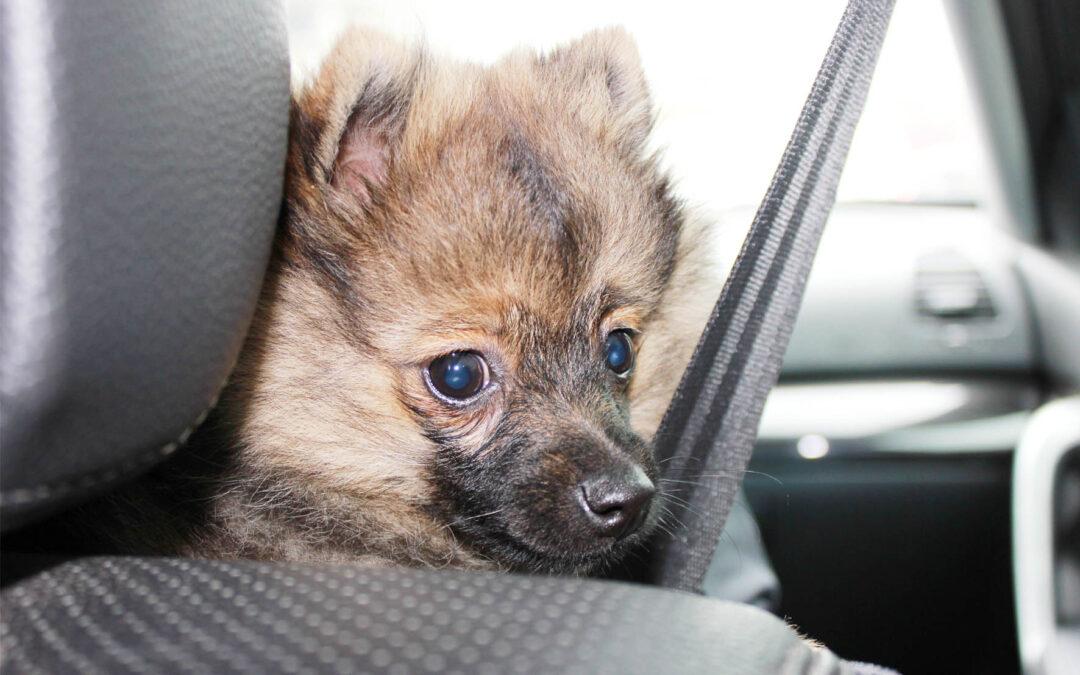 Viajar con el perro en coche