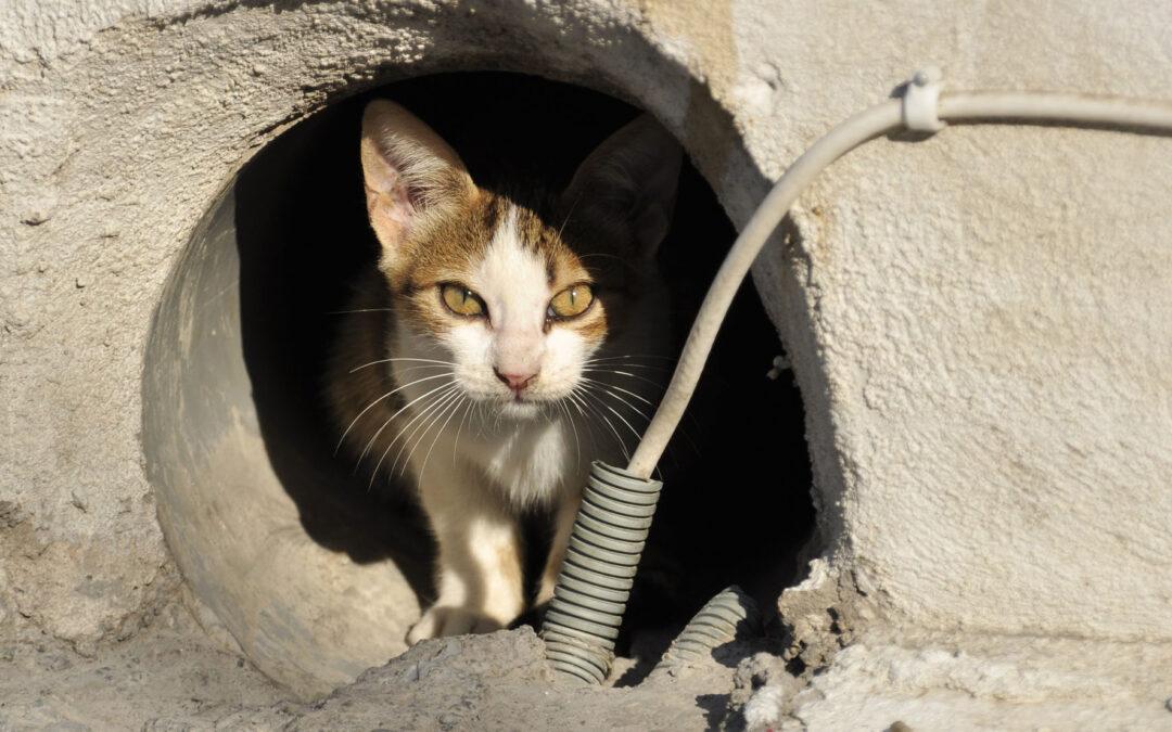Adoptar un gato callejero