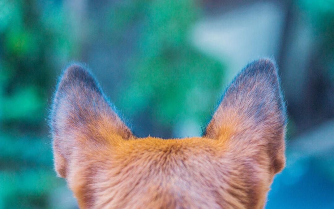 Perro señal para personas sordas