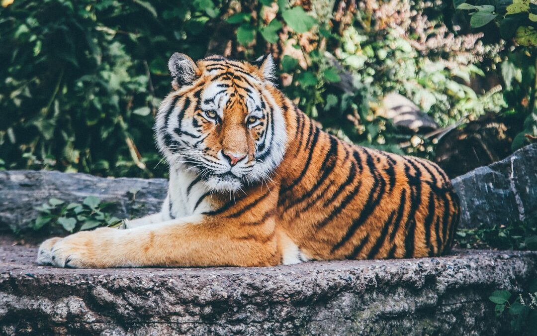 Por qué no tener animales exóticos como mascotas