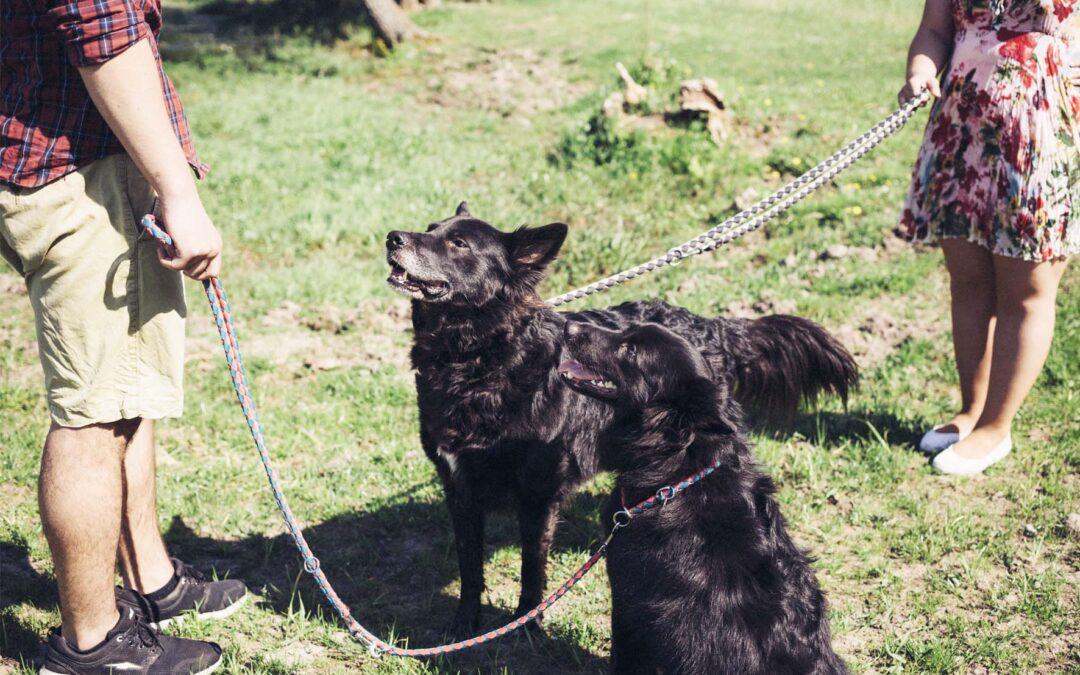 Cómo usar la correa del perro