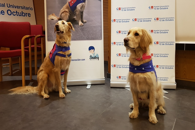 Terapia con perros para pacientes con alcoholismo