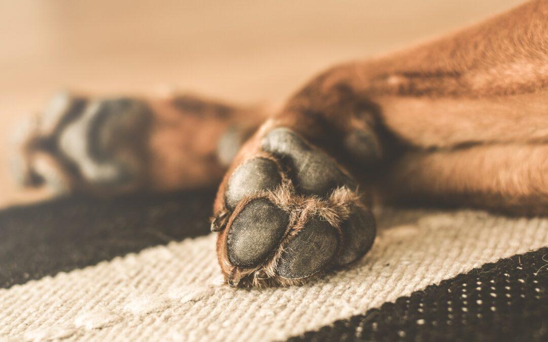 Problemas en las almohadillas del perro