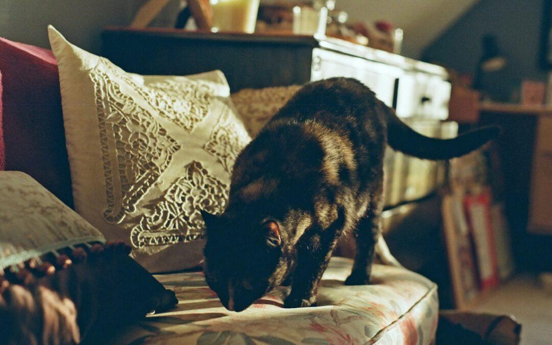 Limpiar el pipí de gato