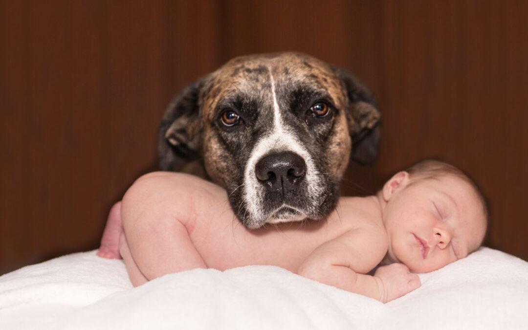 Preparar al perro para la llegada del bebé