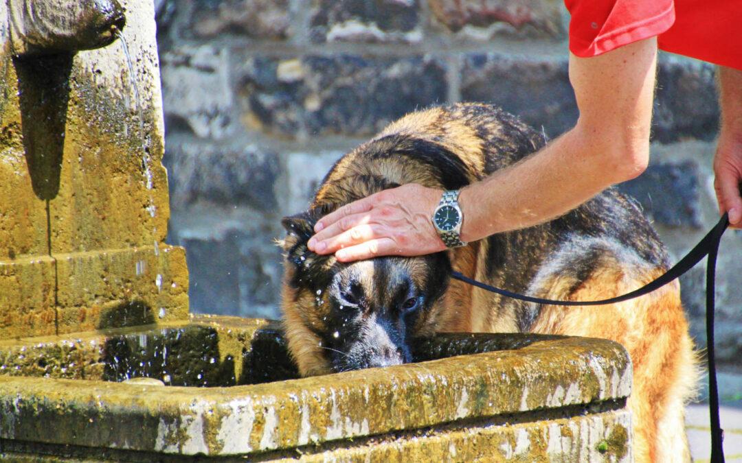Cómo proteger al perro del calor