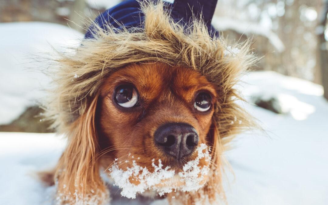Llevar el perro a la nieve
