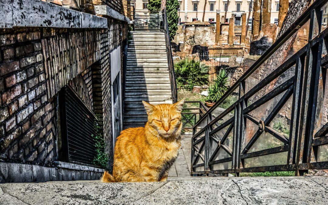 Control de gatos callejeros