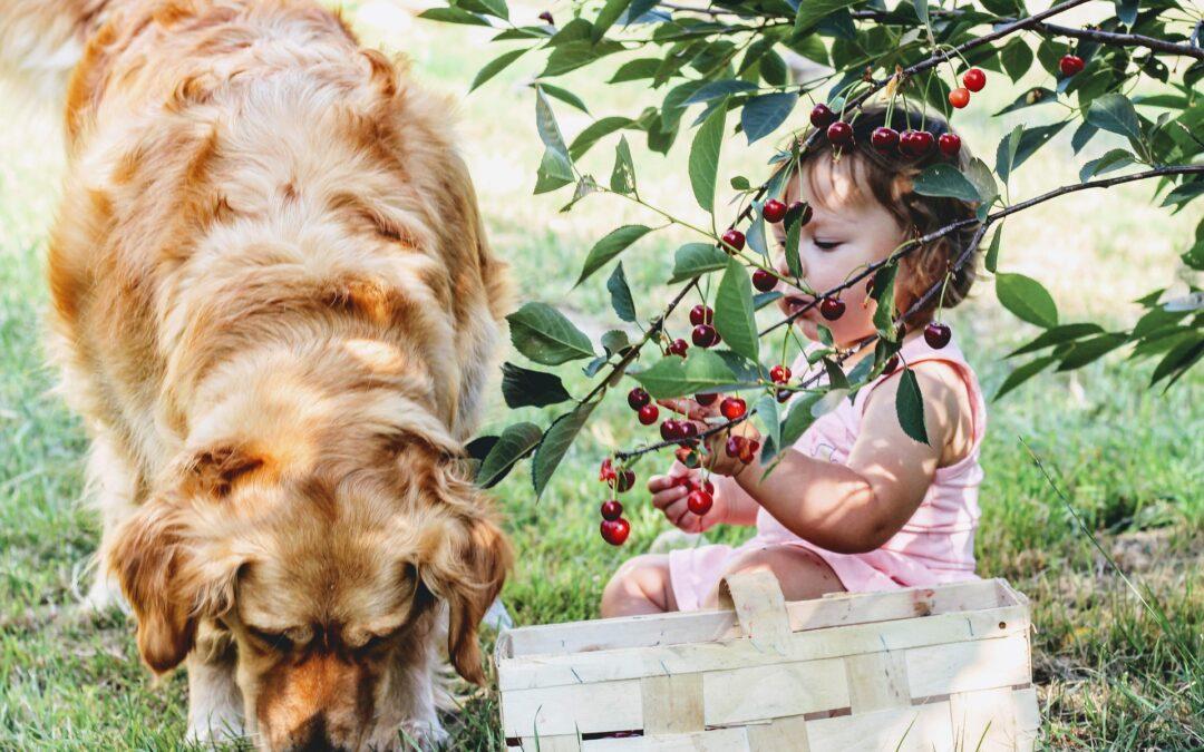 ¿Los perros pueden comer fruta?