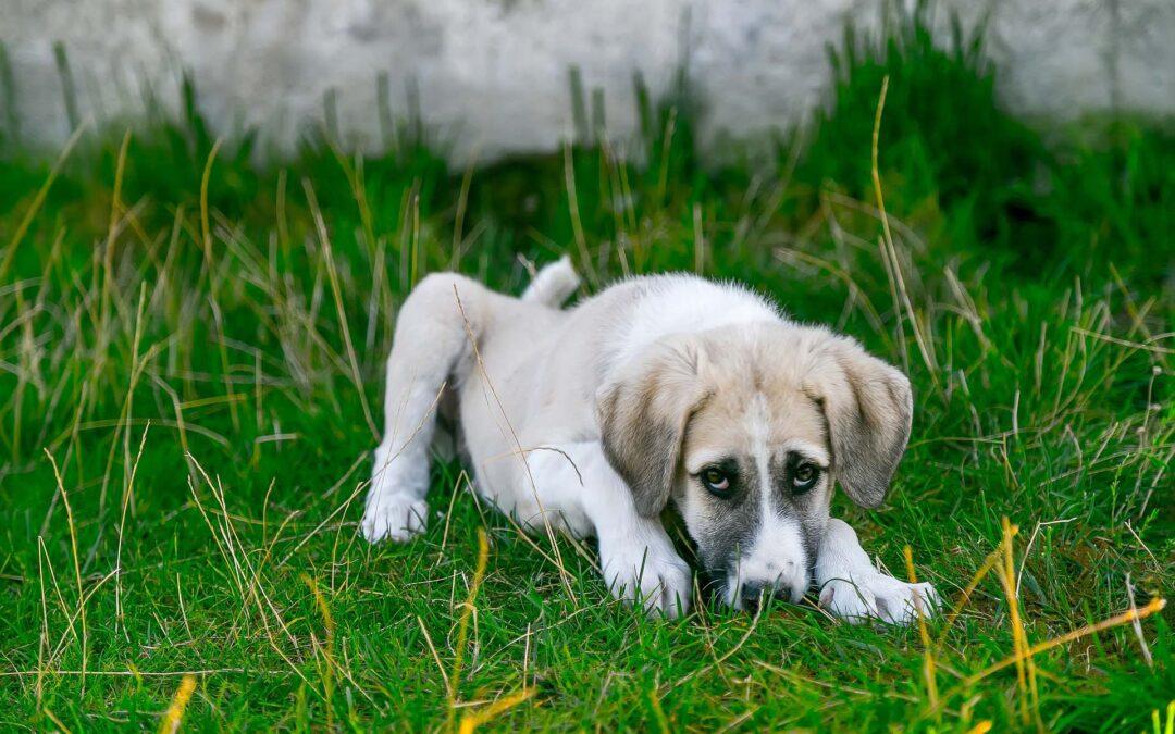 Gases en perros: ¿qué puedo hacer?